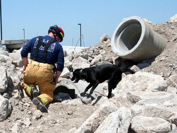 K-9 Search and rescue training
